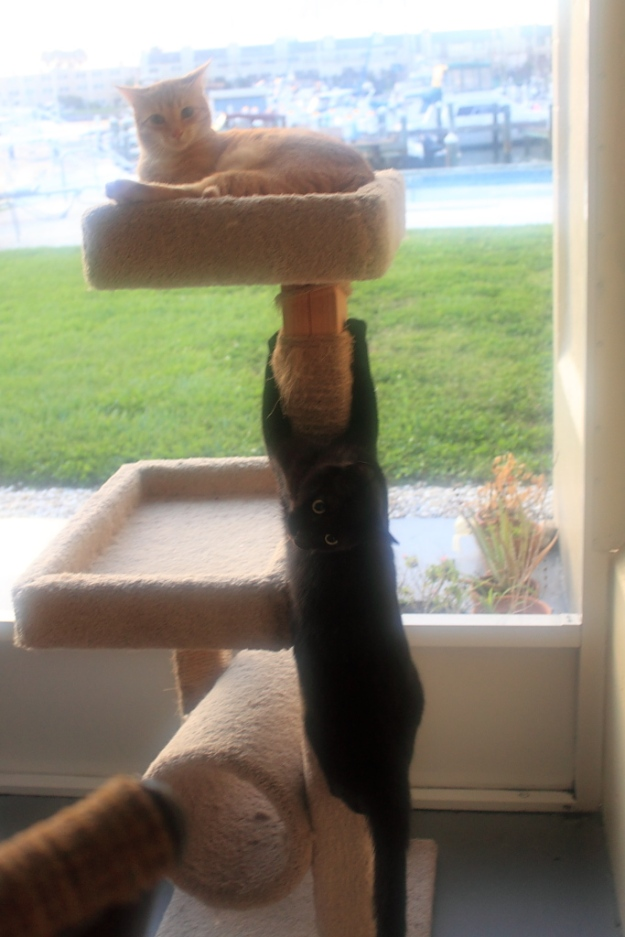 Our cats Chris and Puck on cat tree
