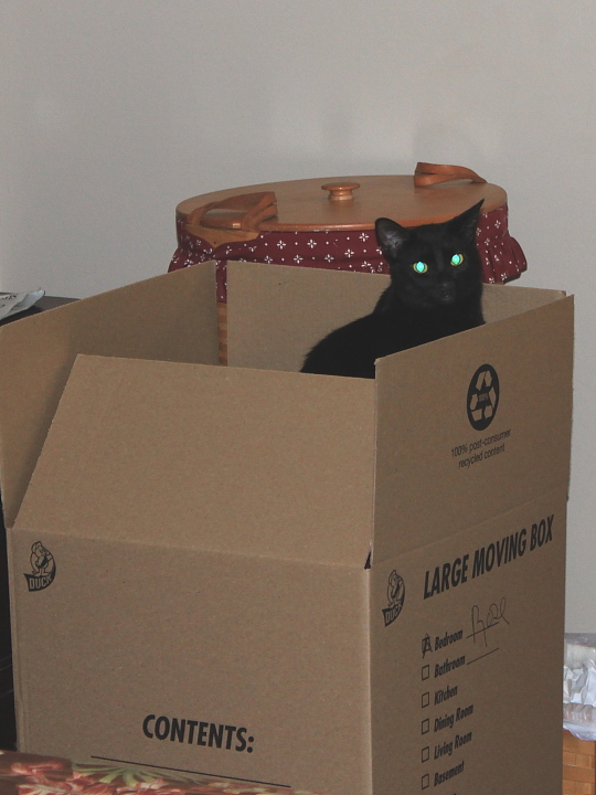 Our cat Puck in box