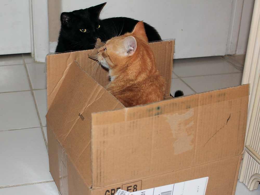 Bad Cat Chris in box