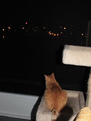 Bad Cat Chris watching fireworks