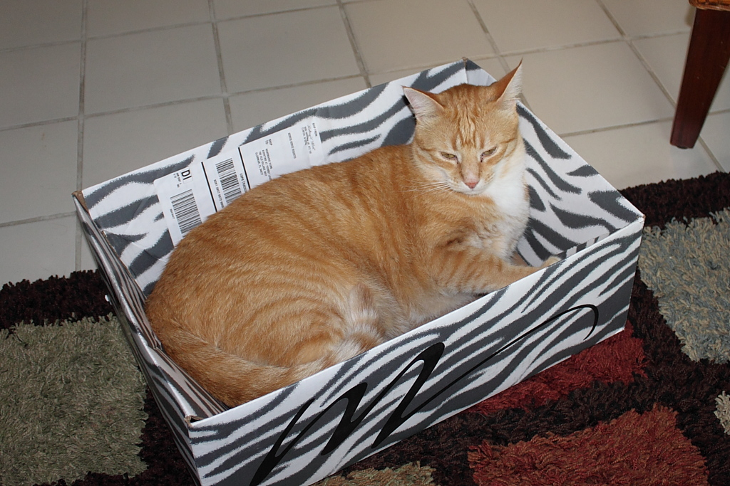 Our cat Chris and a box