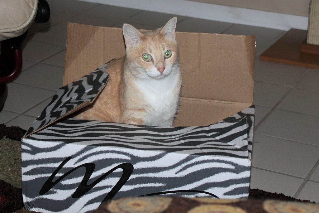 Our cat Frankie in a box