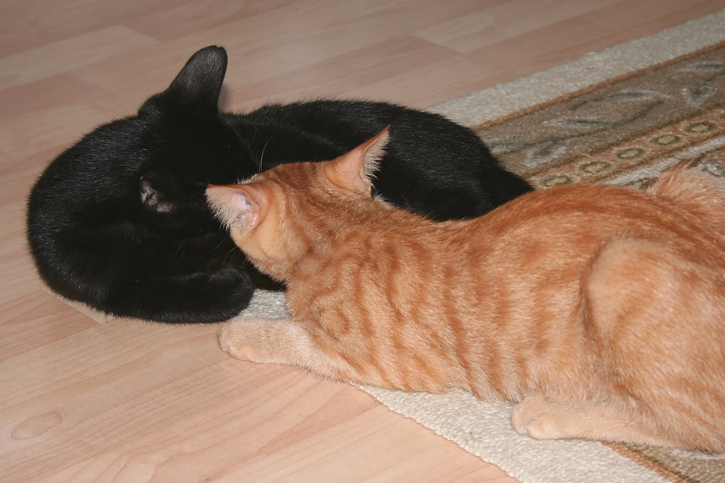 Our cats Tigger and Flash as kittens.