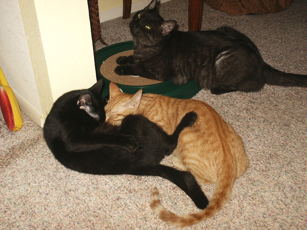 Our cats Tigger, Flash and Alex