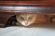 Our cat Frankie under the dressor