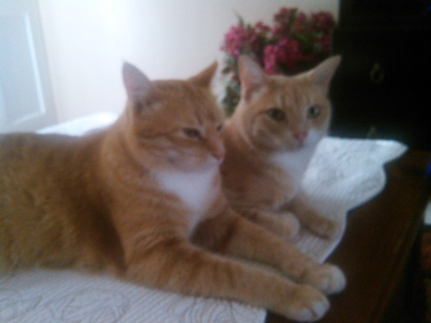 Our cats Chris and Frankie.