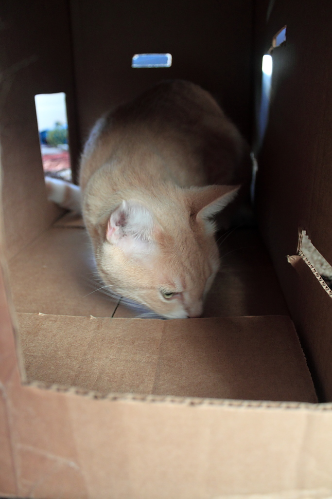 Our cat Frankie at Fort Box