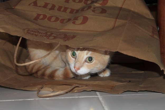 Our cat Frankie in paper bag.