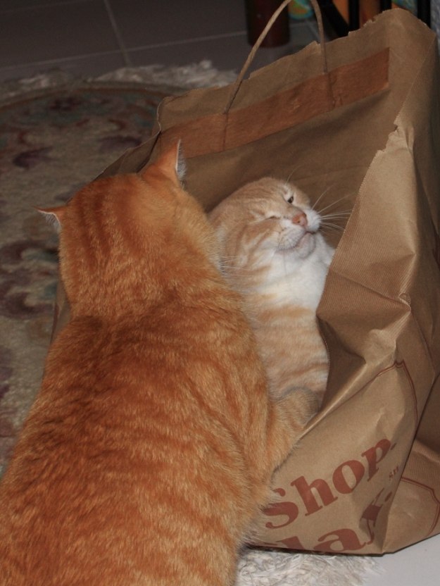 Our cats Frankie and Chris fighting over paper bag.
