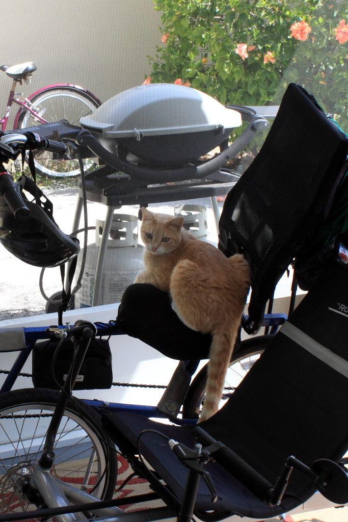 Our cat Frankie on my bike on our patio