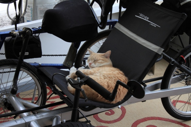 Our cat Frankie on my trike on our patio