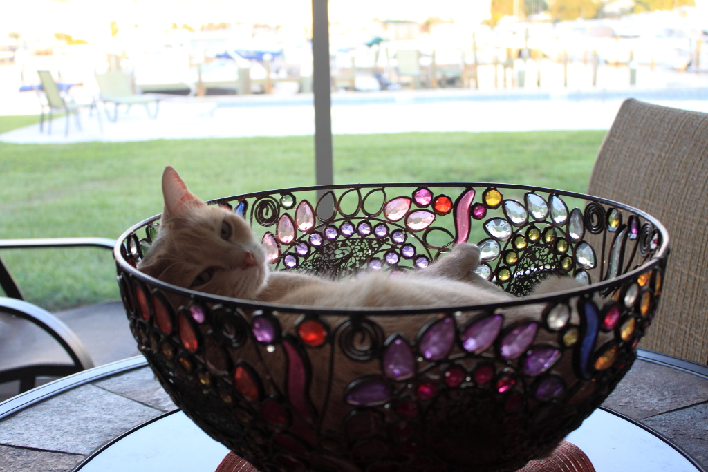 Our cat Frankie in bowl on our patio