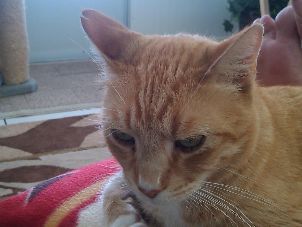Feral Cat Ear Notching (4/4)