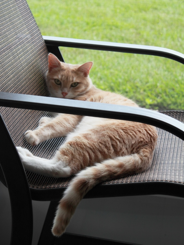 Our cat Frankie on our patio