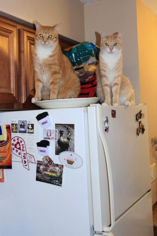 Bad Cat Club. Frankie and Chris on refrigerator.