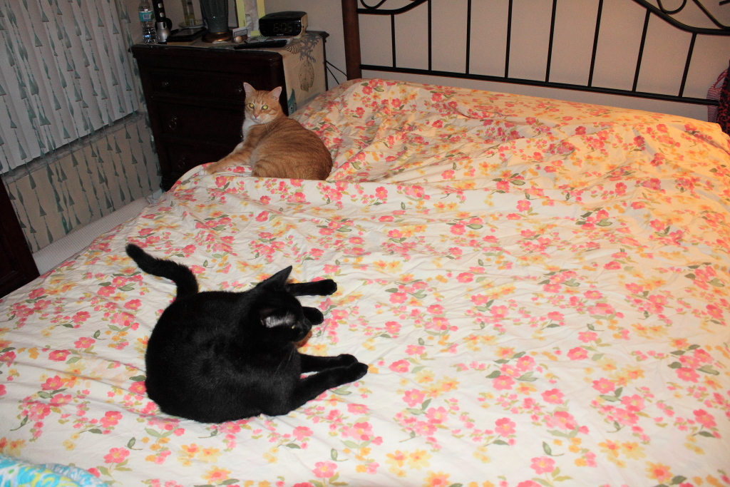 Our cats, Chris and Puck, on the bed