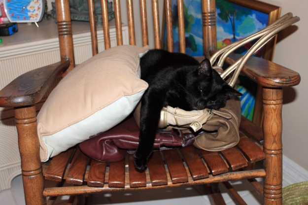 Our cat Puck lying on purses