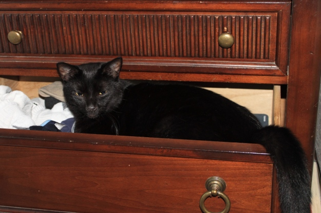 Puck in drawer