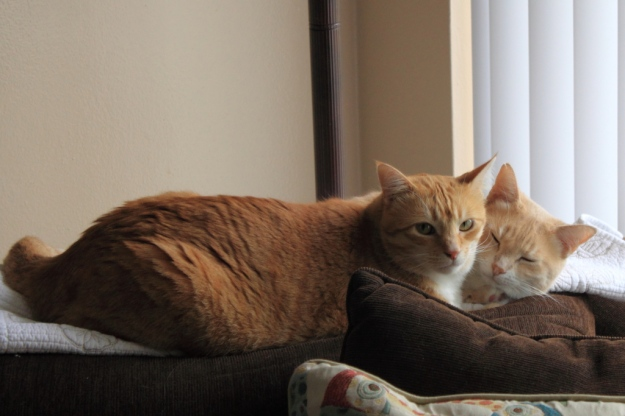 Cats Chris and Frankie.