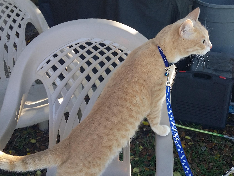Cat Frankie on caair