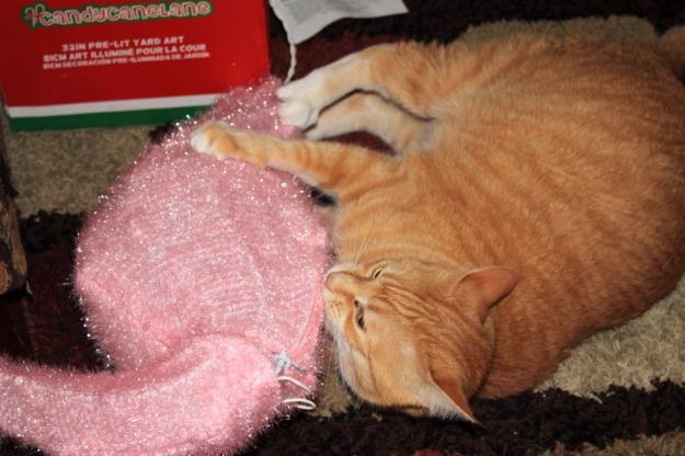 Cat Chris biting Christmas decoration