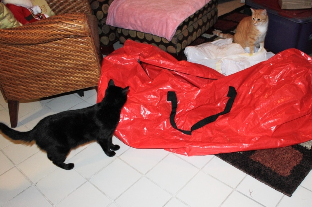 Puck and Bad Cat Chris
