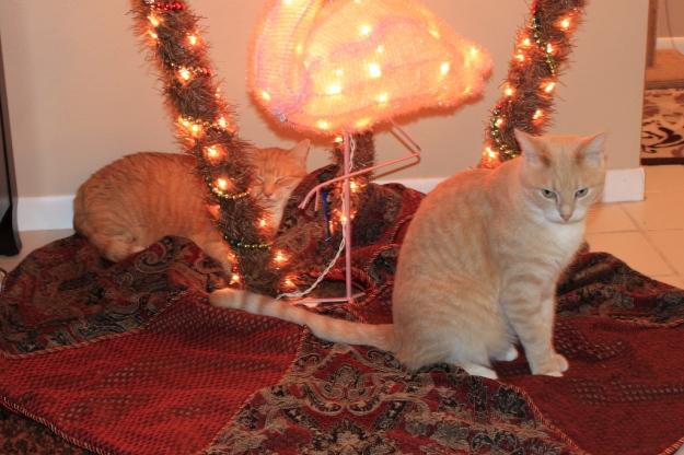Bad Cat Chris, Frankie under Christmas tree.