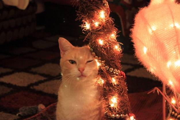 Frankie and Christmas tree.