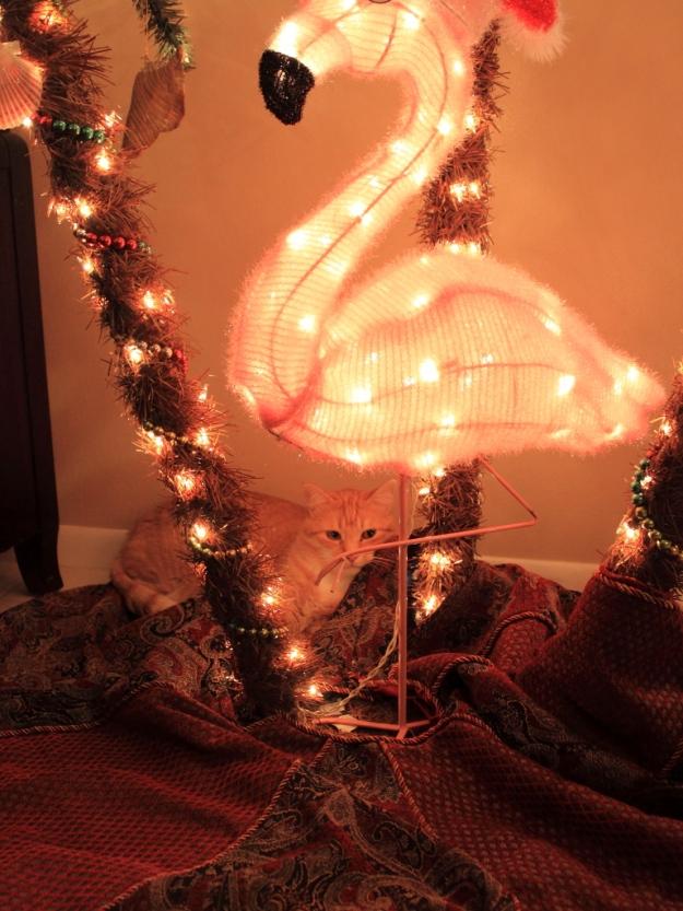 Bad Cat Chris and Christmas tree.