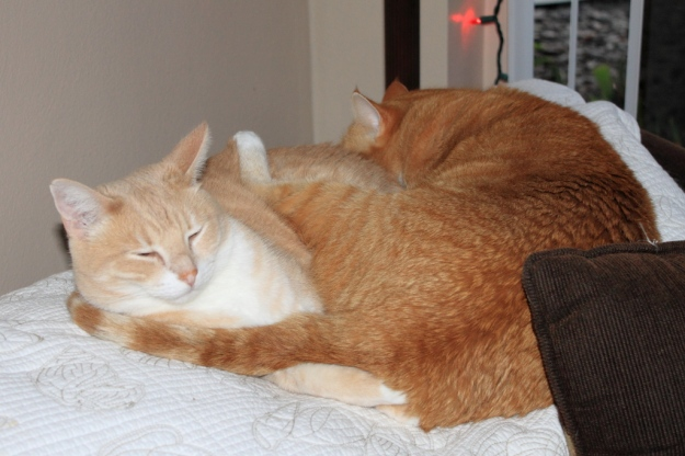 Our cats Frankie and Chris