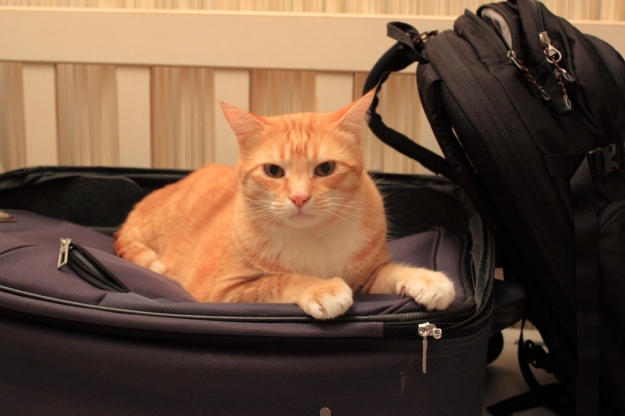 20141221_Cats on luggage_0492