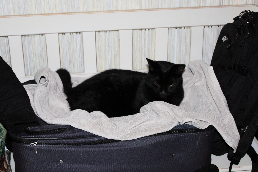 20141221_Cats on luggage_0495