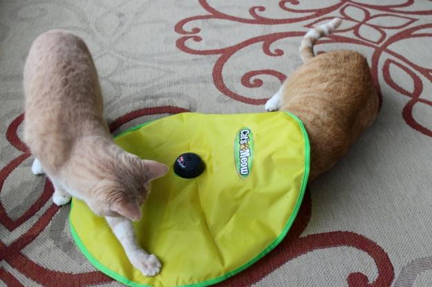 Cat's meow cat toy