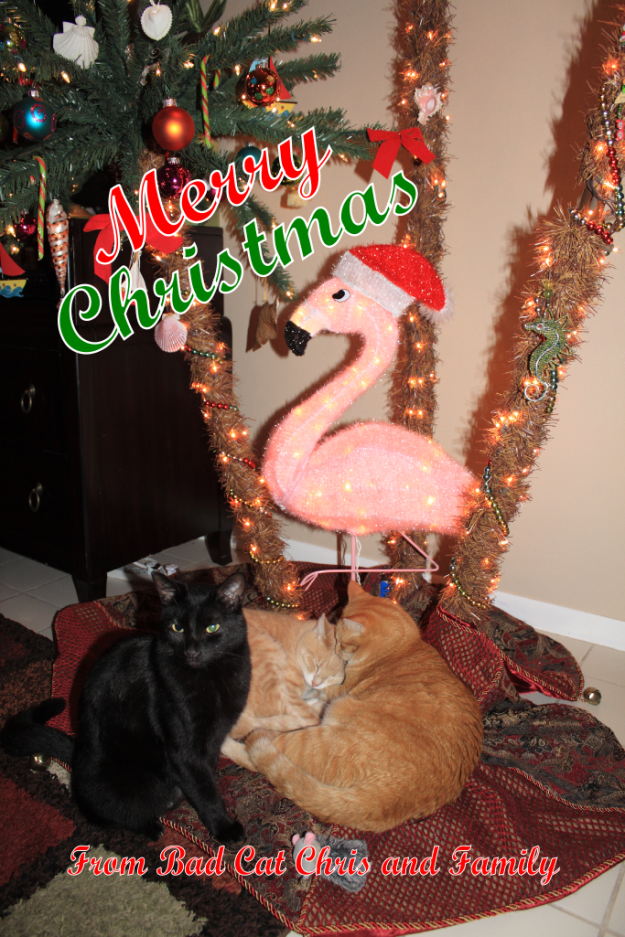 Merry Christmas with cats