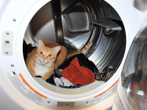 Cat Chris in the dryer