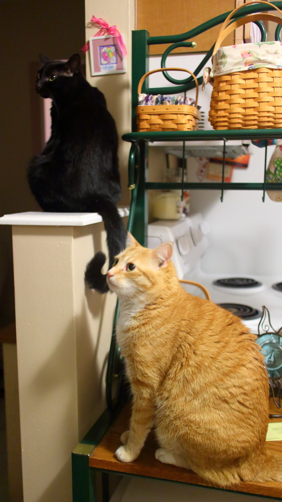 Our cats Chris and Puck