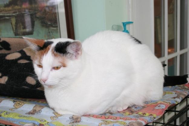 Sarah, Sav-r-cats