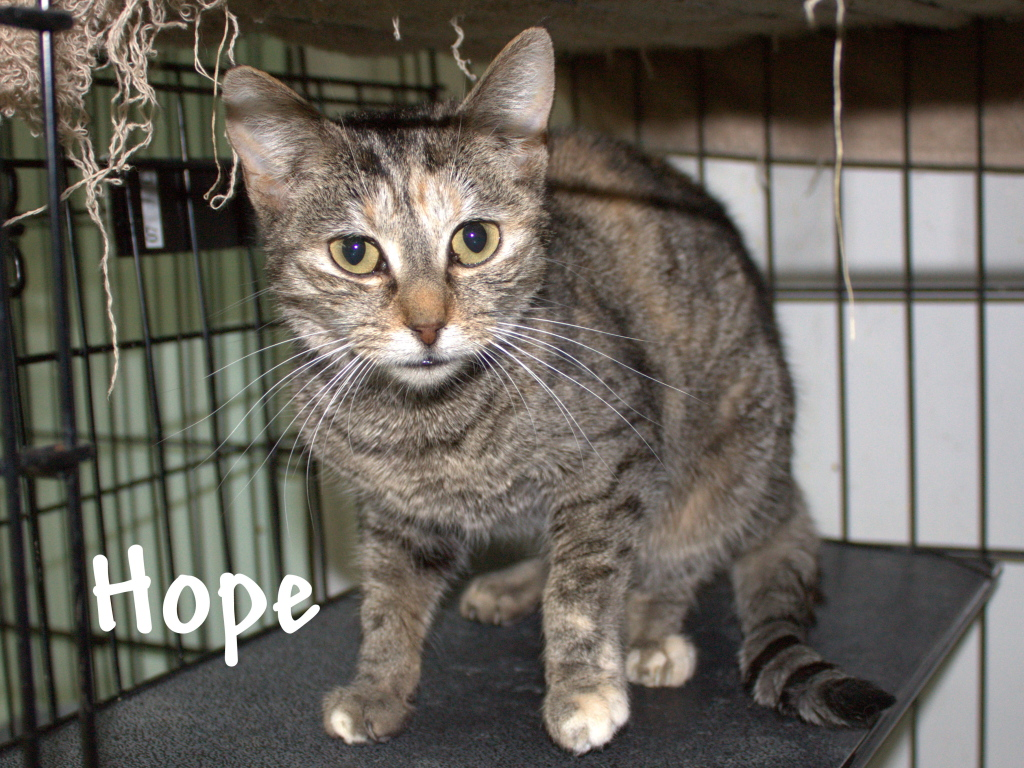 Hope, dated February 11, 2010.