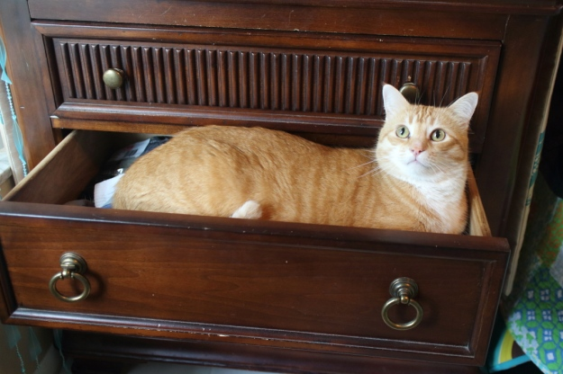 Bad Cat Chris in drawer