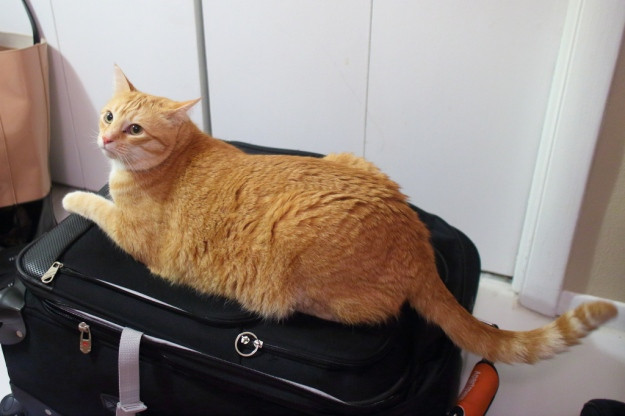 Our cat Chris lying on suitcase