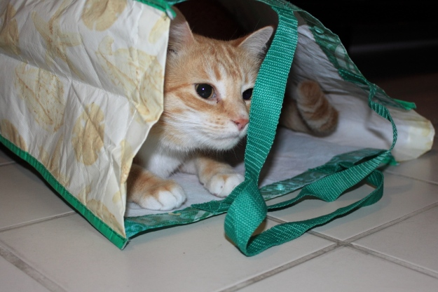 Bad Cat Chris in bag