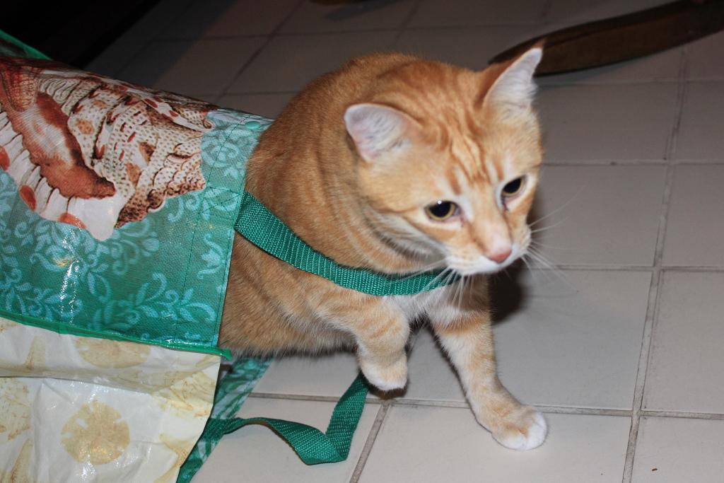 Bad Cat Chris in bag