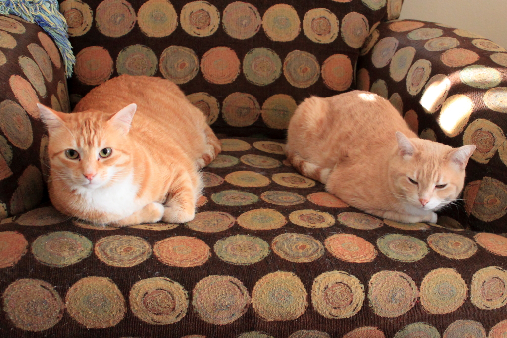 Cats Chris and Frankie
