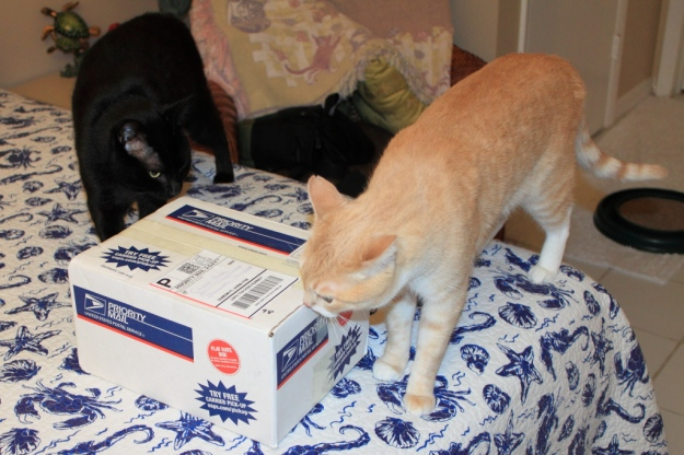 Cats inspecting package