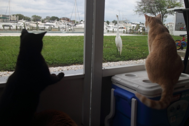 Cats and egret