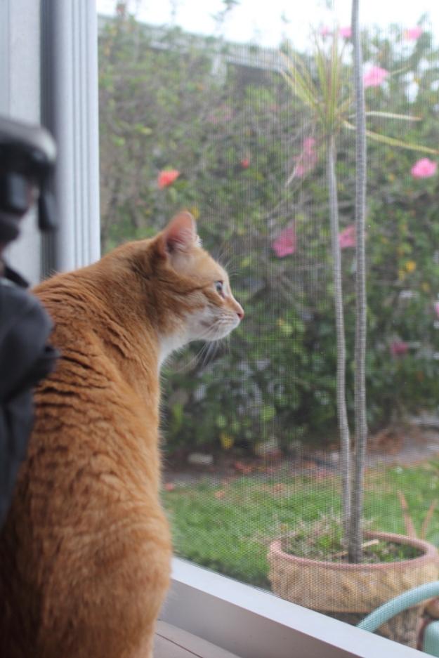bad cat chris watching egret