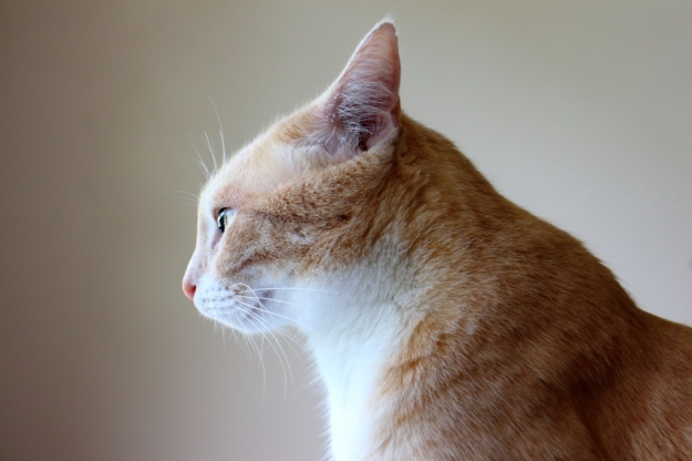 Profile of our cat Frankie