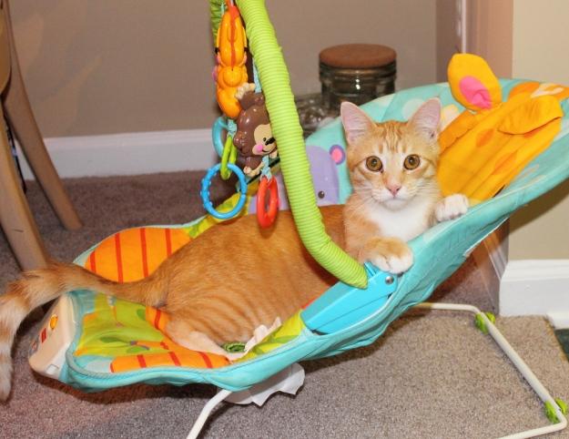 Bad Cat Chris in baby carrier