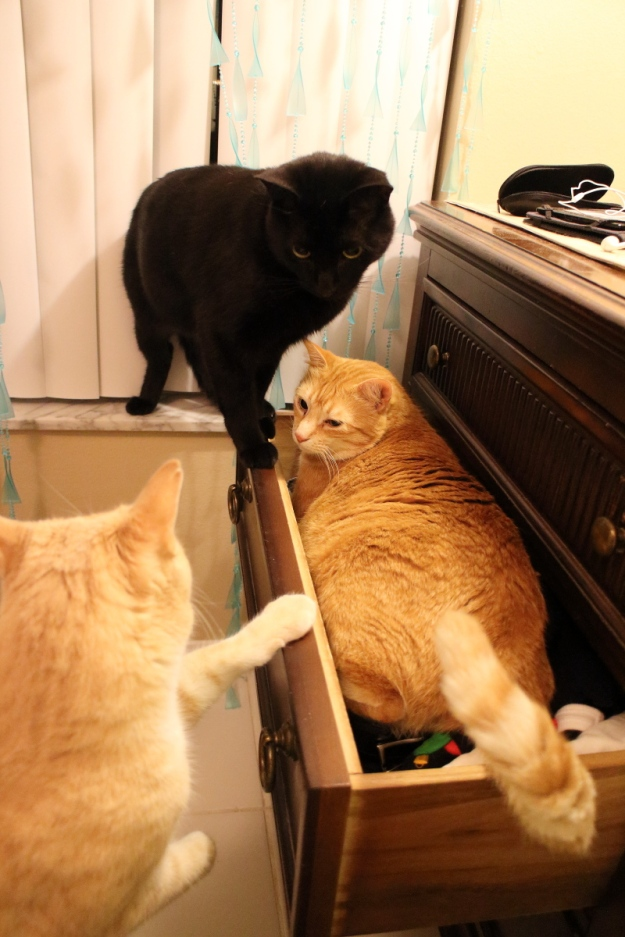 cats wanting to get in drawer