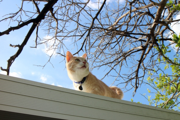 Our cat Frankie on roof